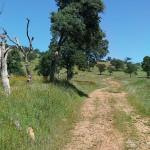 Peoria Ridge Trail Bisect