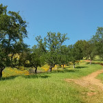 Peoria Mountan Trail