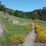 Along Green Springs Trail