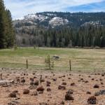 Bell Meadow