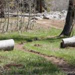Bell Meadow Trail