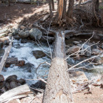 Log Crossing Bell Creek