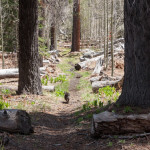 Trail on East Side of Bell Meadow