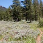 Herring Creek Trail