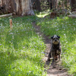 Mannie Posing For an Ideal Trail Shot