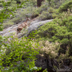Wildlife on Trail to Camp Lake