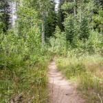 Bear Lake Trail with Aspen Trees