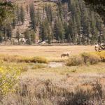 Horse in Cooper Meadow