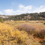 View of Cooper Meadow