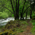 Foot Bridge Along Trail