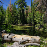 Pond Along Pinecrest Peak Trail