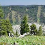 Dodge Ridge From Pinecrest Peak