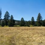 Wheat's Meadow